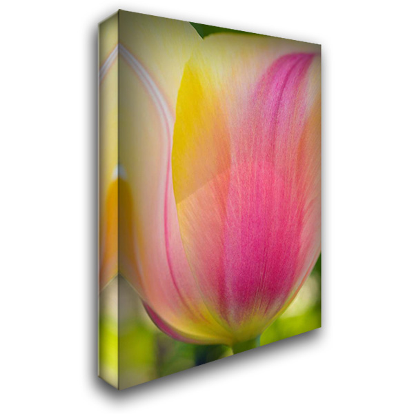 Tulip Macro II 28x40 Gallery Wrapped Stretched Canvas Art by Arduini, JoAnn