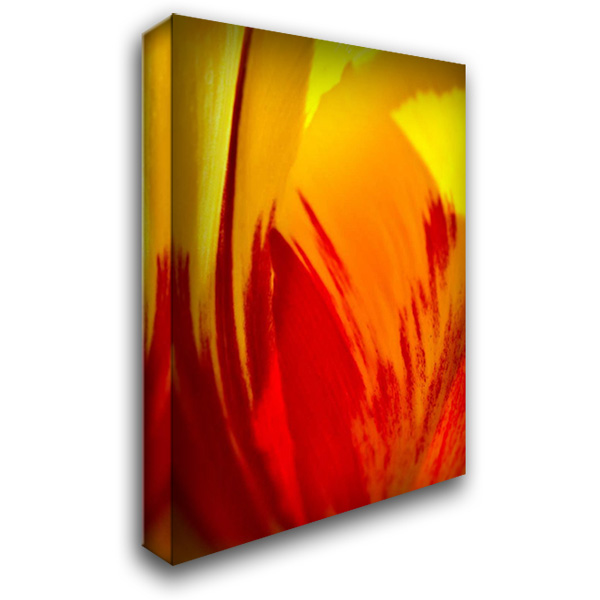 Tulip Abstract II 28x40 Gallery Wrapped Stretched Canvas Art by Arduini, JoAnn