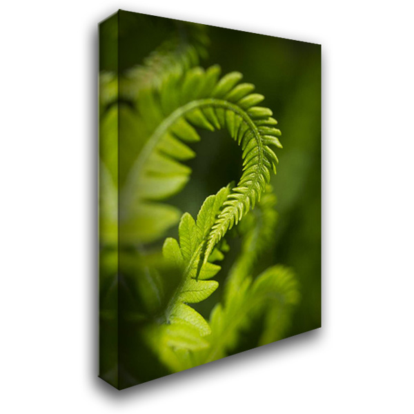 Green Garden I 28x40 Gallery Wrapped Stretched Canvas Art by Arduini, JoAnn