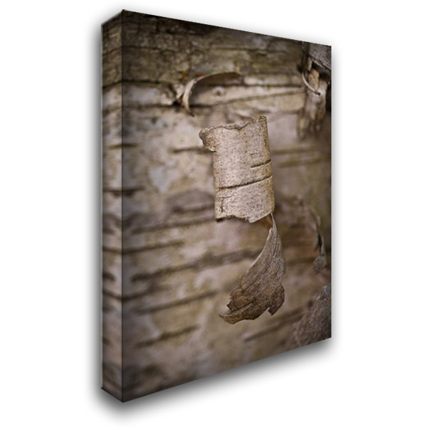 Bark Peel I 28x40 Gallery Wrapped Stretched Canvas Art by Arduini, JoAnn