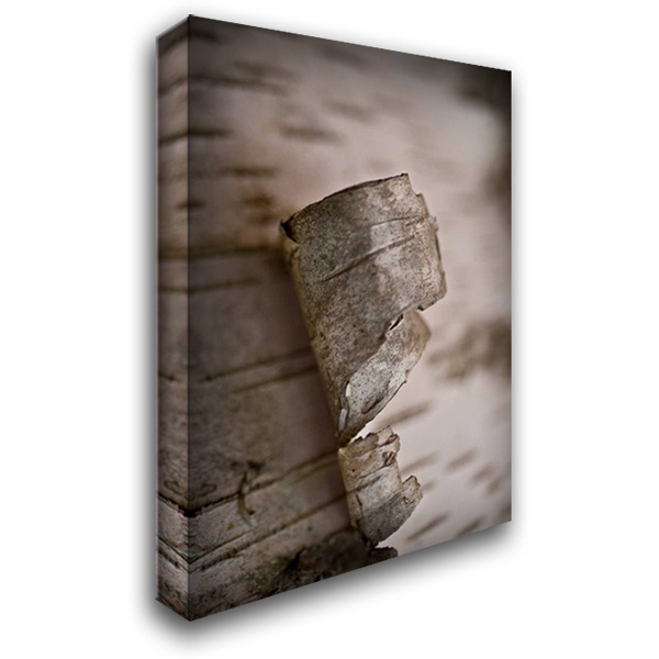 Bark Peel II 28x40 Gallery Wrapped Stretched Canvas Art by Arduini, JoAnn