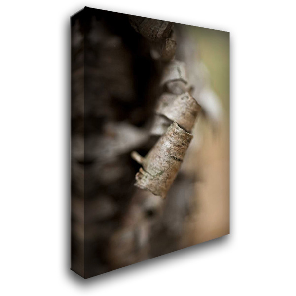 Bark Peel III 28x40 Gallery Wrapped Stretched Canvas Art by Arduini, JoAnn