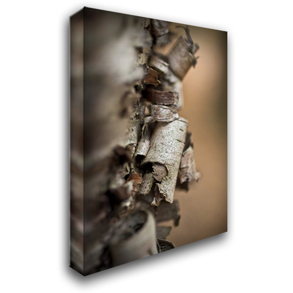 Bark Peel IV 28x40 Gallery Wrapped Stretched Canvas Art by Arduini, JoAnn