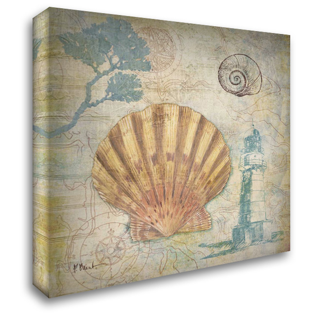 Discovery Shell II 28x28 Gallery Wrapped Stretched Canvas Art by Brent, Paul