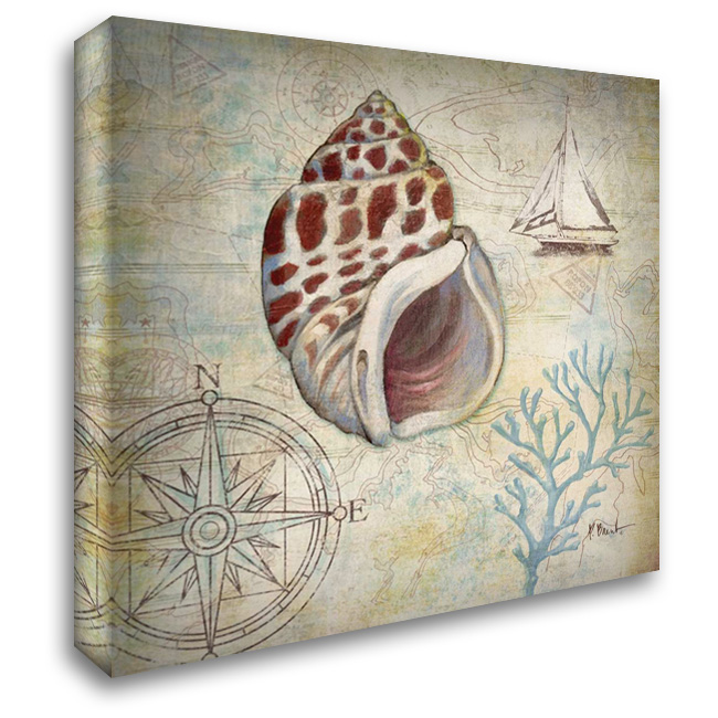 Discovery Shell IV 28x28 Gallery Wrapped Stretched Canvas Art by Brent, Paul
