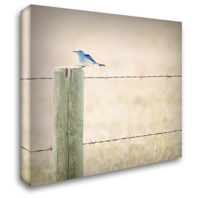 Happiness on Wings 28x28 Gallery Wrapped Stretched Canvas Art by Murray, Roberta