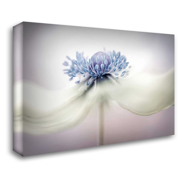 Disher - Anemone 40x28 Gallery Wrapped Stretched Canvas Art by 1x