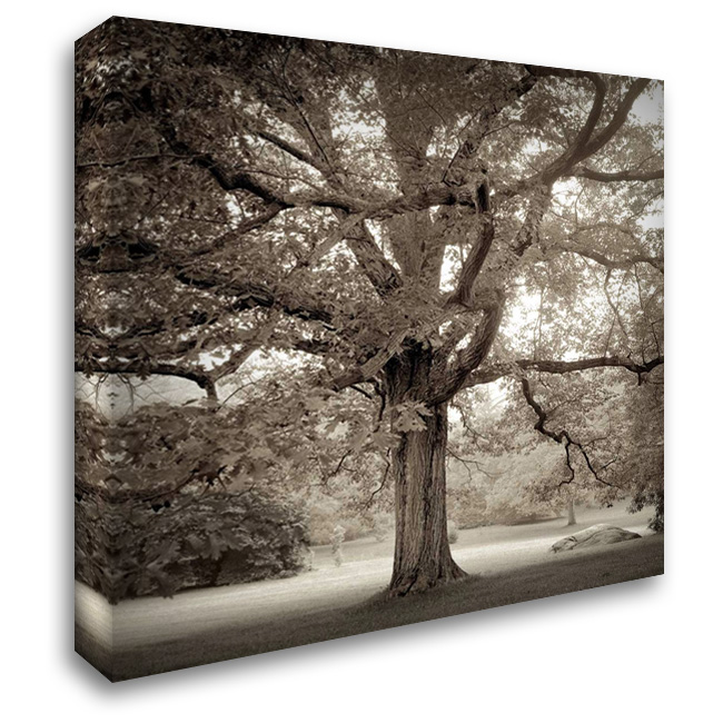 Hampton Maple - 1 28x28 Gallery Wrapped Stretched Canvas Art by Blaustein, Alan