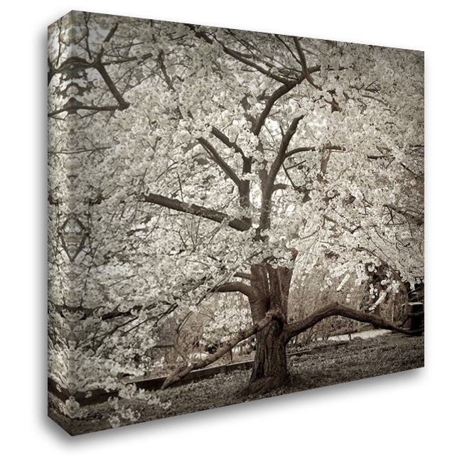 Hampton Magnolia - 2 28x28 Gallery Wrapped Stretched Canvas Art by Blaustein, Alan