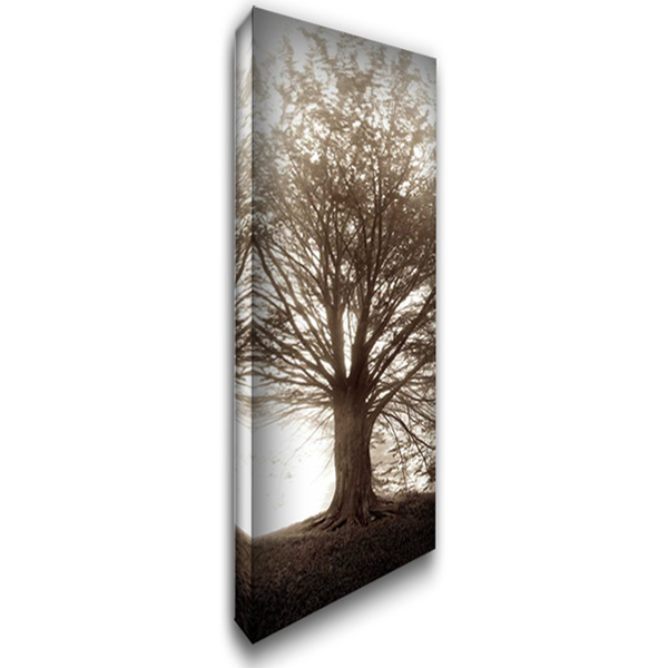 Hampton Gates Tree No.1 16x40 Gallery Wrapped Stretched Canvas Art by Blaustein, Alan