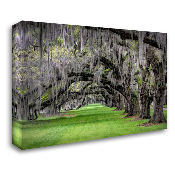 Hanging to the Left 40x28 Gallery Wrapped Stretched Canvas Art by Burt, Daniel
