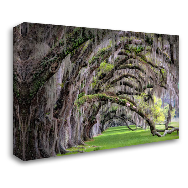 Hanging to the Right 40x28 Gallery Wrapped Stretched Canvas Art by Burt, Daniel