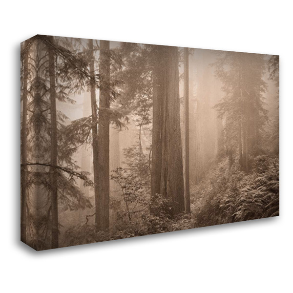 Enchanted Forest II 40x28 Gallery Wrapped Stretched Canvas Art by Svibilsky, Igor