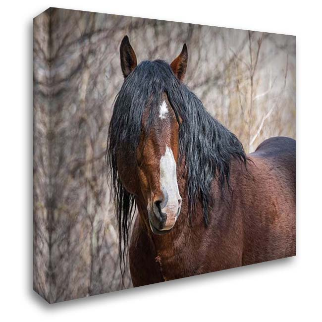 Half Mask - Ochoco Stallion 36x28 Gallery Wrapped Stretched Canvas Art by McFerrin, Larry