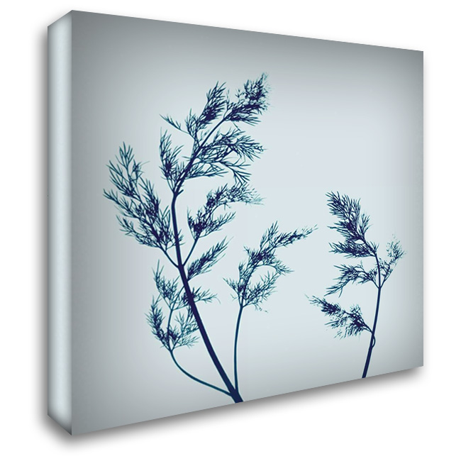 Dill 28x28 Gallery Wrapped Stretched Canvas Art by Farrell, Nina