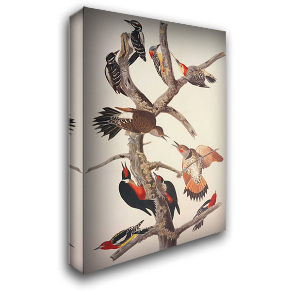 Hairy Woodpecker 28x40 Gallery Wrapped Stretched Canvas Art by Audubon, John James