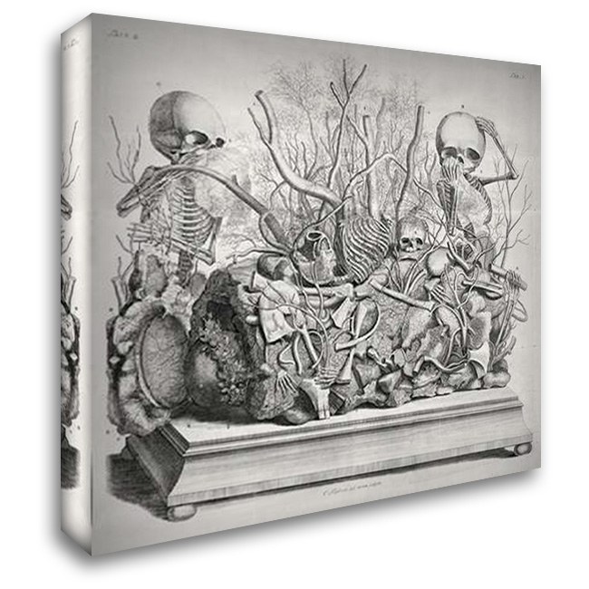 Diorama of fetal skeletons arranged with various internal organs 30x28 Gallery Wrapped Stretched Canvas Art by Huyberts, Cornelis